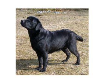 Hunder div04 (13)